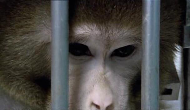 Monkeys, Rats and Me Animal Testing.WnA 198